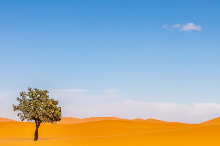 Guarding The Dune