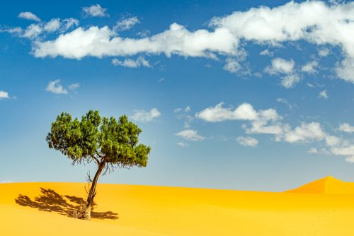 Lone Tree In The Sahara