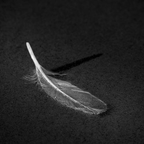 White Feather (Angels Are Near)