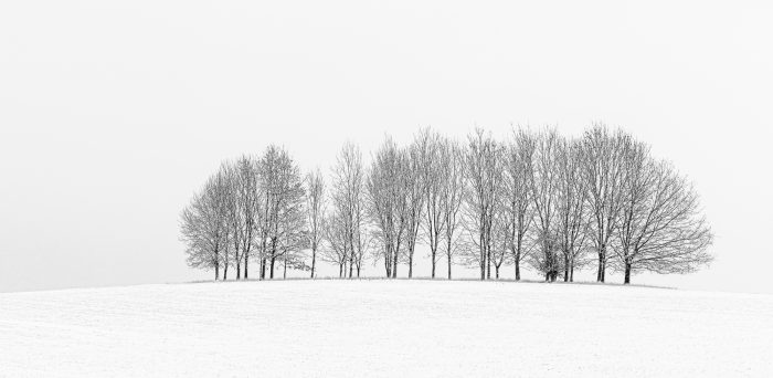 Winter Trees In Isolation